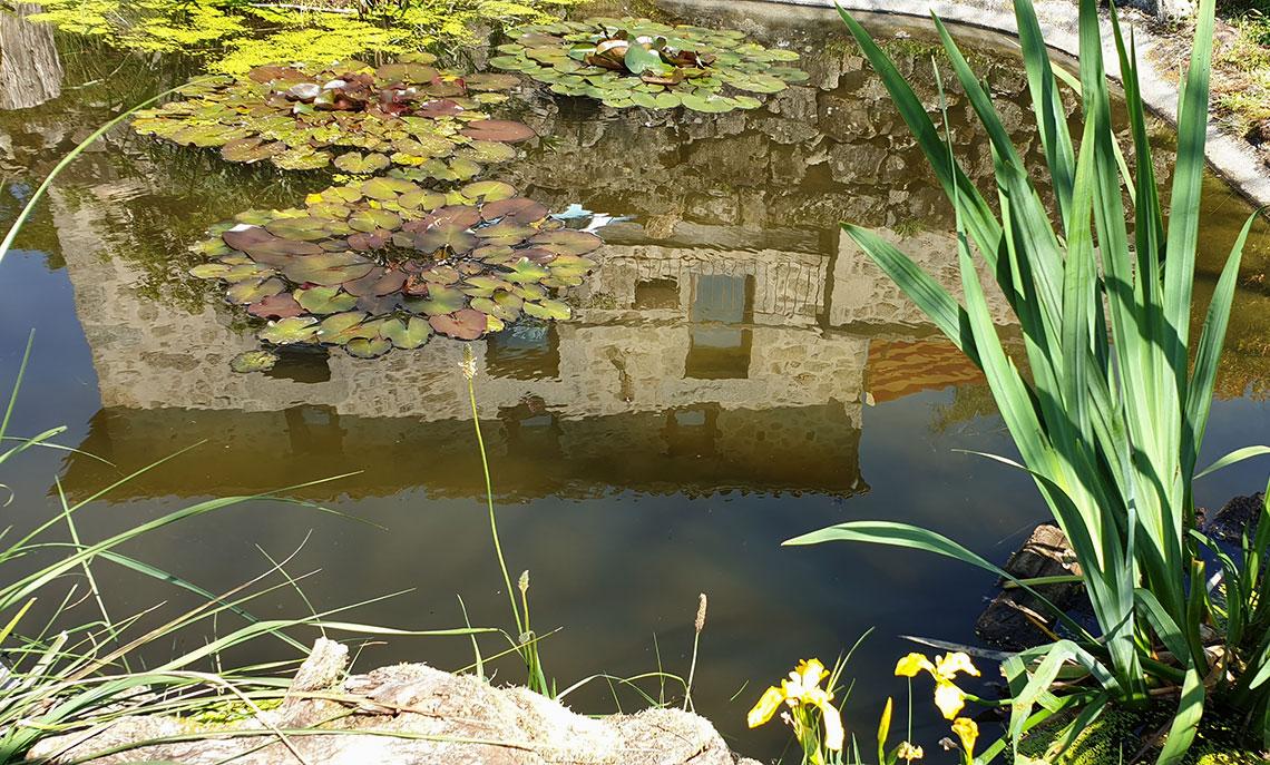 Domaine Hypolite - le bassin